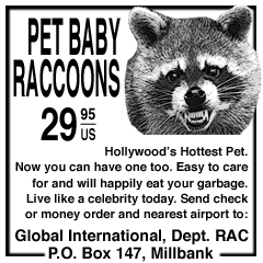 raccoons.png