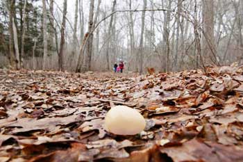 Moostarian Easter Egg Hunt Called Off